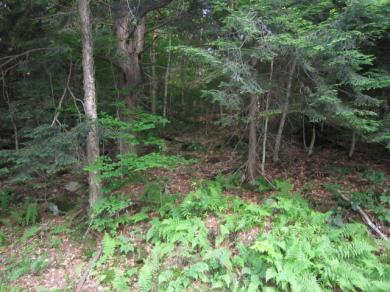 000 Petrie Road, Old Forge, NY 13420