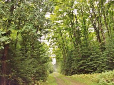 Photo of ON Pine Lake Rd, Minocqua, WI 54548